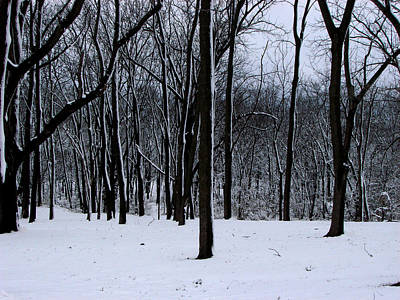 Trees In Winter Art Print by Dave Clark