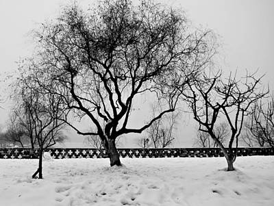 Photograph - Trees In Winter by Dean Harte