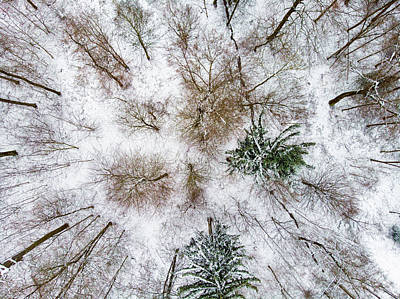 Photograph - Trees In Winter From Above - Drone Photography by Matthias Hauser