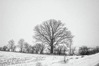 Photograph - Trees In Winter by Marvin Borst