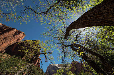 Photograph - Trees In Zion National Park by Mike Shaw