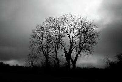 Photograph - Trees by James Clancy