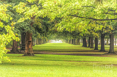 Photograph - Trees by Jim Lepard
