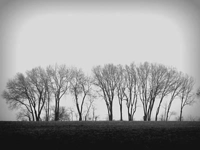 Photograph - Trees by Joseph Skompski