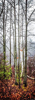 Photograph - Trees, Late Fall by Gary Shepard