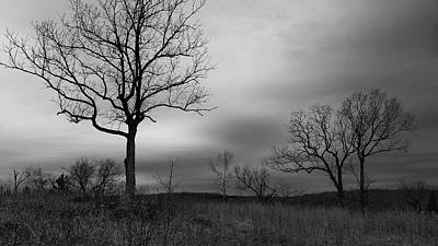 Photograph - Trees by Linda Shannon Morgan
