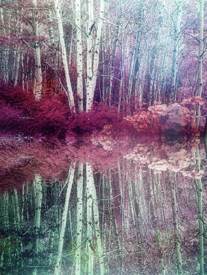 Photograph - Trees Lost In Thought by Tara Turner