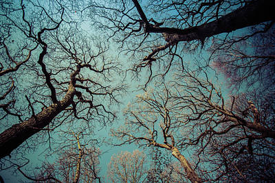 Digital Art - Trees by Mike Taylor