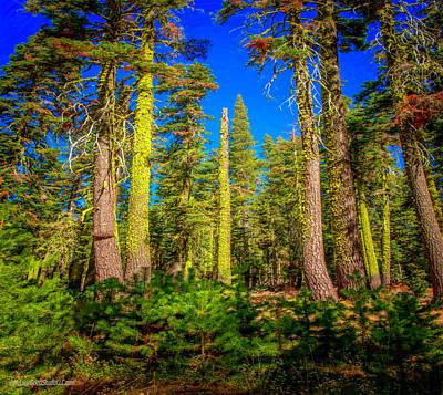 Photograph - Trees Near Echo Lake by LeeAnn McLaneGoetz McLaneGoetzStudioLLCcom