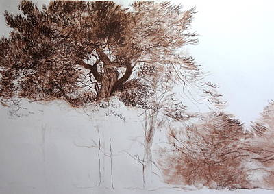 Drawing - Trees Near Offa's Dyke by Harry Robertson