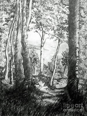 Woodlands Scene Drawing - Trees Near The Lake by Carolyn Alston Thomas