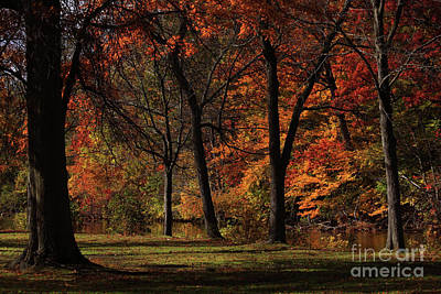 Connecticut Landscape Photograph - Trees Of Autumn by Karol Livote