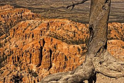 Photograph - Trees Of Bryce - 1  by Hany J