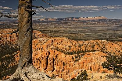 Photograph - Trees Of Bryce - 2 by Hany J