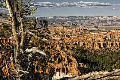 Photograph - Trees Of Bryce - 3 by Hany J