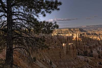 Photograph - Trees Of Bryce - 4  by Hany J