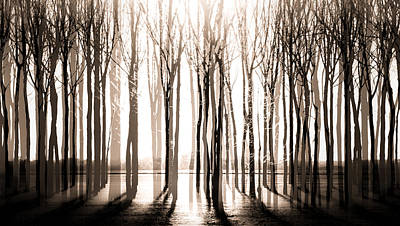 Photograph - Trees Of Future Past by Michael Arend