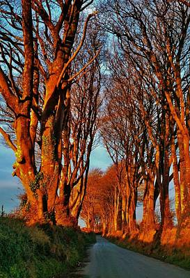 Photograph - Trees Of Gold by Richard Brookes