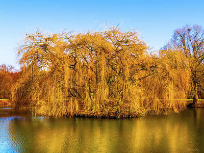 Photograph - Trees Of Gold by Wim Lanclus