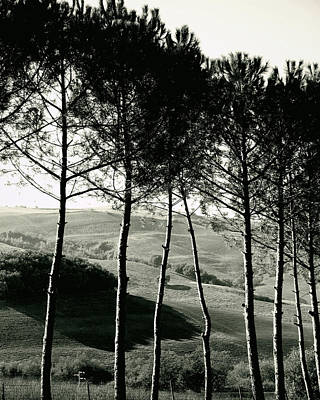 Photograph - Trees Of Italia by Best Captured