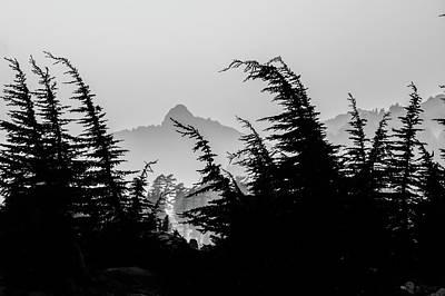 Photograph - Trees Of Lassen by Veronika Countryman