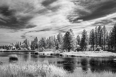 Trees Of The Preserve Print by Jon Glaser