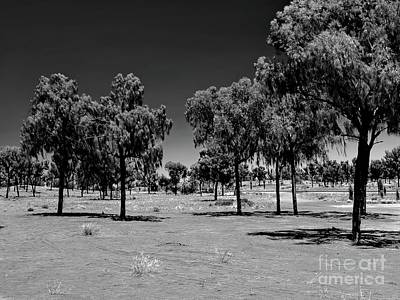Photograph - The Ghost Trees Of Uluru Bw by Tim Richards
