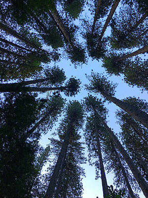 Photograph - Trees Of Yosemite  by Mercedes Martishius