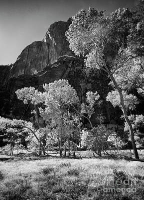 Photograph - Trees Of Zion by Scott Kemper