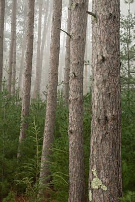 Soap Suds - Trees on a Foggy Autumn Day 3 by Nancy De Flon