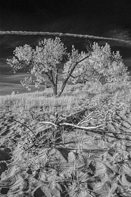 Photograph - Trees On A Sand Dune In Infrared by Randall Nyhof
