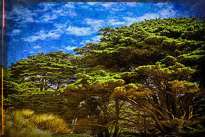 Photograph - Trees On An Oregon Beach by John Brink