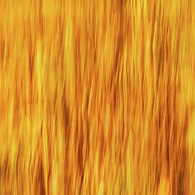Open Impressionism California Desert - Trees On Fire Abstract by Gary Slawsky