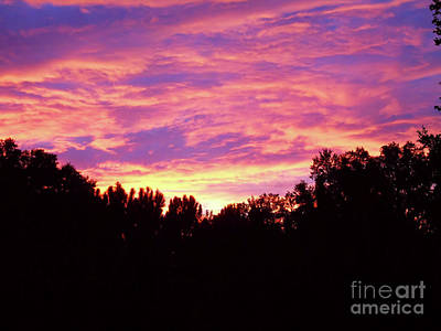 Photograph - Trees On Fire At Sunset by D Hackett