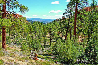 Photograph - Trees On Floor Of Bryce Canyon On Queen's Garden Trail In Bryce Canyon National Park, Utah  by Ruth Hager