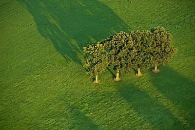 Heiko Koehrerwagner Photograph - Trees On Green by Heiko Koehrer-Wagner