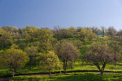 Photograph - Trees On Hillside by Mike Evangelist