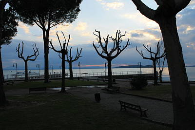 Lamdscape Photograph - Trees On Lake Beach by Carlo Artemi