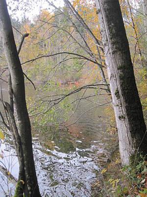 Art Print featuring the photograph Trees On Lake Padden by Karen Molenaar Terrell