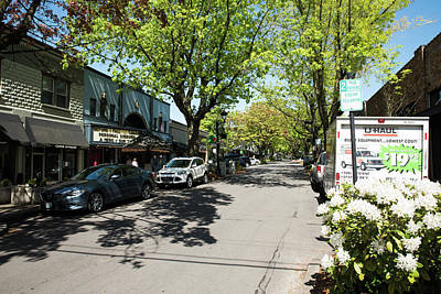 Photograph - Trees On Ne 4th Ave In Camas by Tom Cochran
