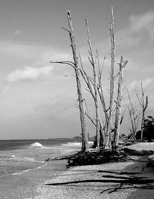 Trees On The Beach Black And White Art Print by Rosalie Scanlon