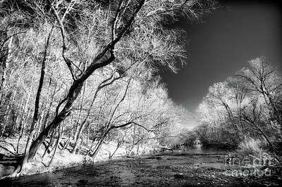 Photograph - Trees On The River Bank Bw by Dan Carmichael