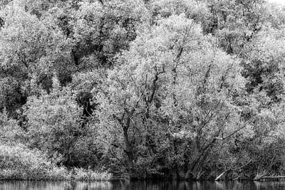Trees On The River Art Print