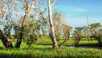 Photograph - Trees On Yellow Water, Kakadu N P by Lexa Harpell