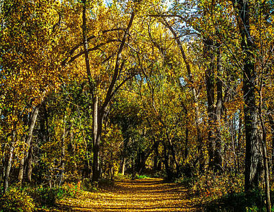 Photograph - Trees Over A Path Through The Woods In Fall Color by John Brink