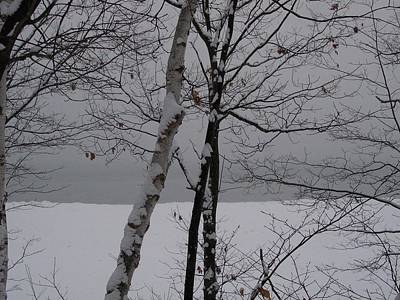 Photograph - Trees Over Bay by Desiree Paquette