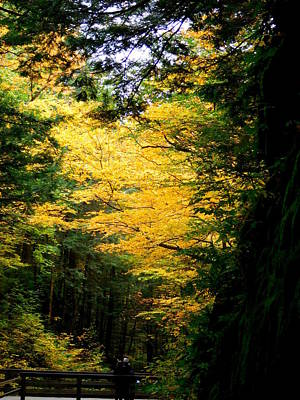 Photograph - Trees Over The Flumes Gorge by Catherine Gagne