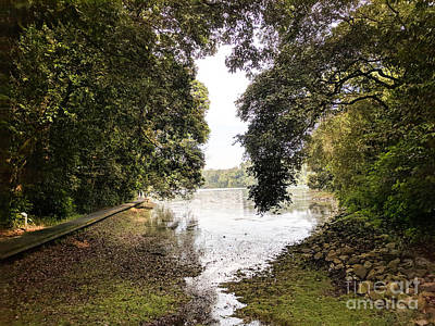 Photograph - Trees Overhanging Macritchie Reservoir In Singapore by Nicholas Braman