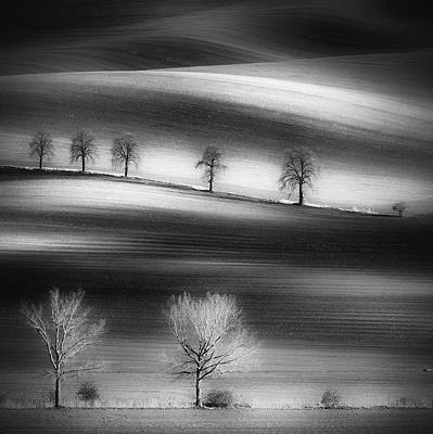 Moravia Photograph - Trees by Piotr Krol (bax)