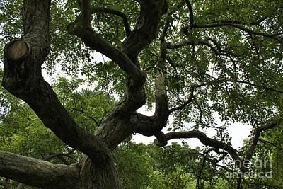 Katharine Hepburn - Trees Prescott Park Portsmouth NH by Karen Desrosiers
